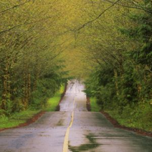 Country Road After a Spring Rain - Vancouver Islan