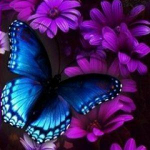 Tapety pozadia na mobil samsung s3110 zadarmo fantasy butterfly voltagebd Images
