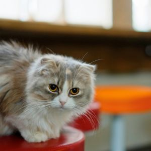 HD mačička obrázky